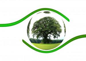 ecology-450590_1280 (1)